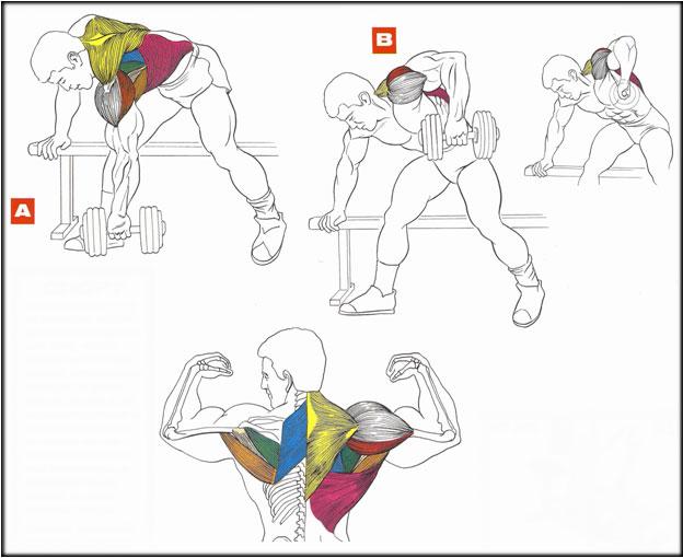 Синонимы и антонимы «мускулистый» - анализ 80